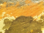 "Exhibition: ""Variations on a theme - the Vascão brook"", by Orlando José"