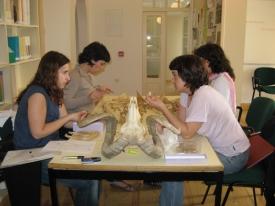 Curso de Zooarqueologia